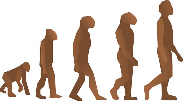 evolution-24560_640